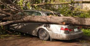 Chain saw massacre: Insurance for downed trees